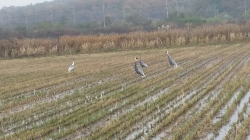 대성동마을 새들의 쉼과 비행